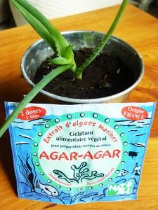 Agar Aloe